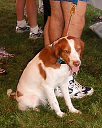 DSCN6342, Blaze the dog